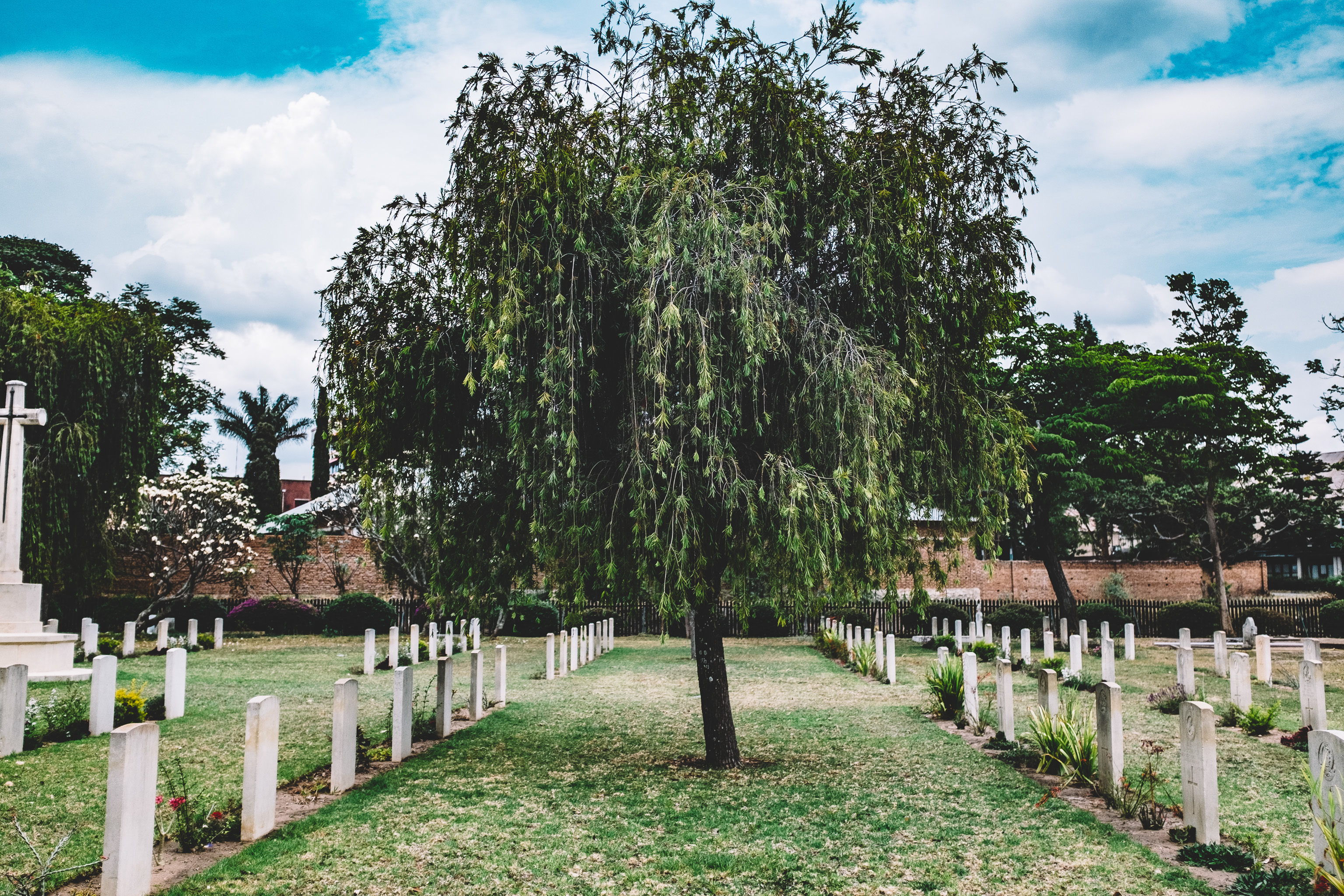 Tree in Graveyard