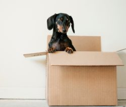 Moving? We can help